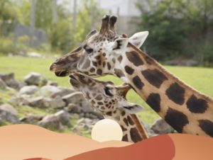 activité famille girafes safari