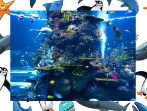 Aquarium poissons activités en famille